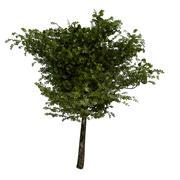 Träd 2 3d model