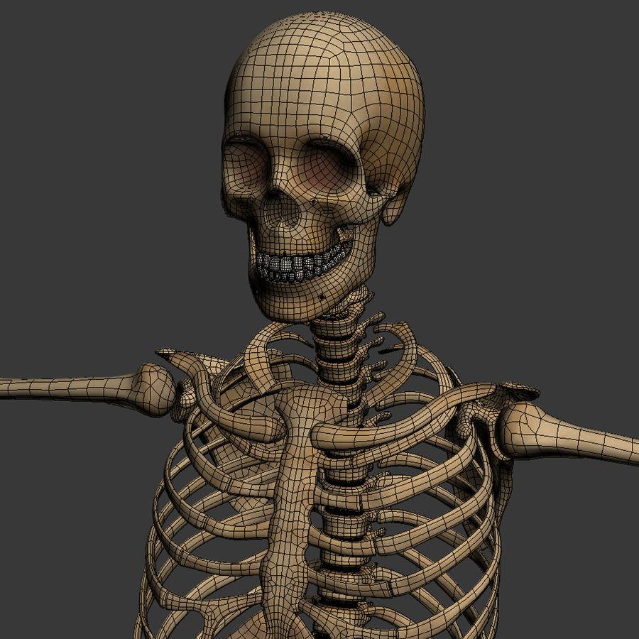 Human Skeleton royalty-free 3d model - Preview no. 26