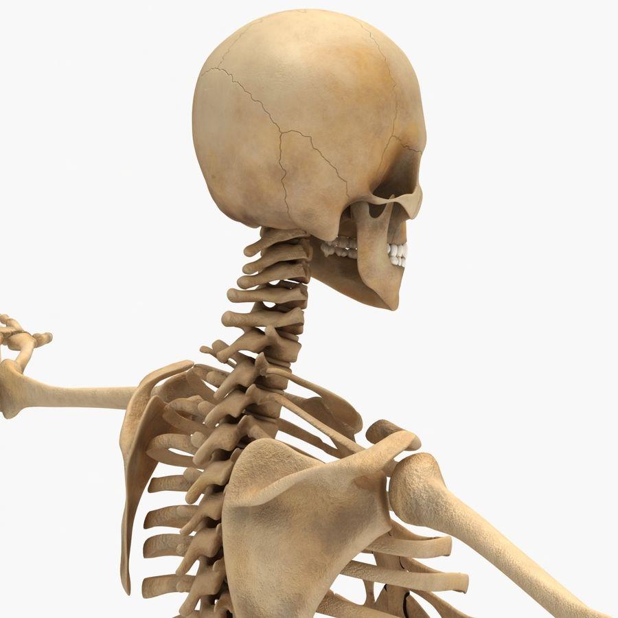 Human Skeleton royalty-free 3d model - Preview no. 7