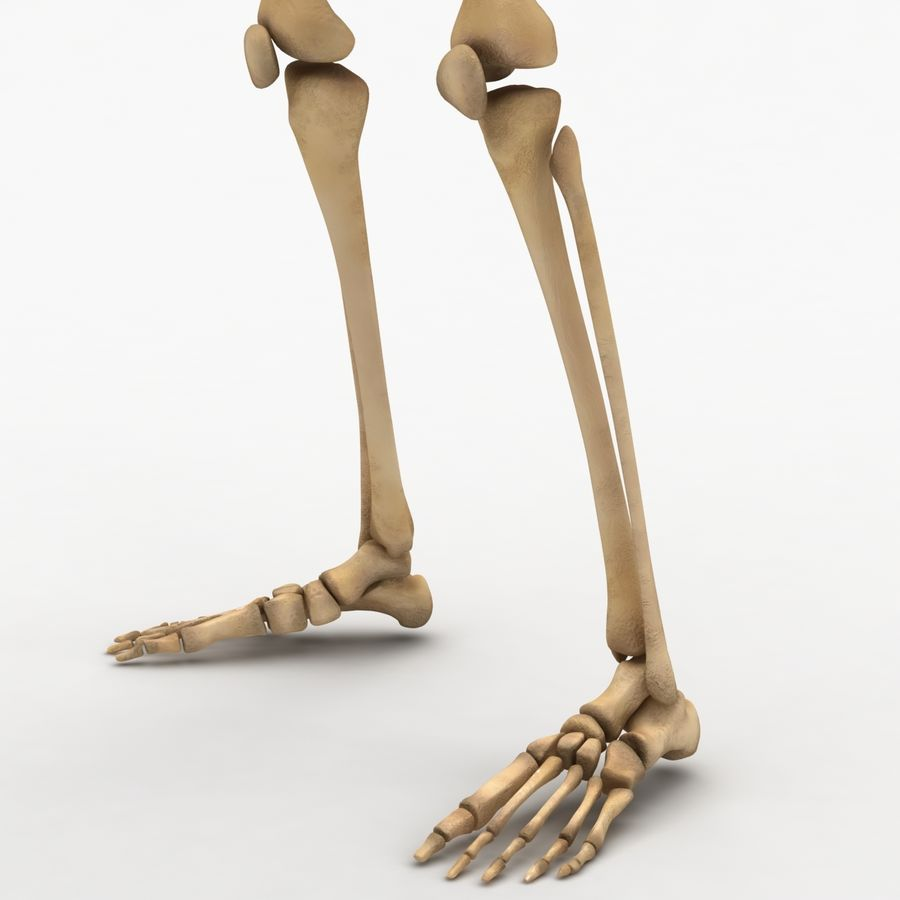 Human Skeleton royalty-free 3d model - Preview no. 18