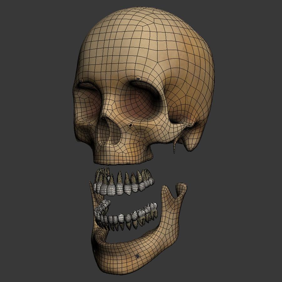 Human Skeleton royalty-free 3d model - Preview no. 31