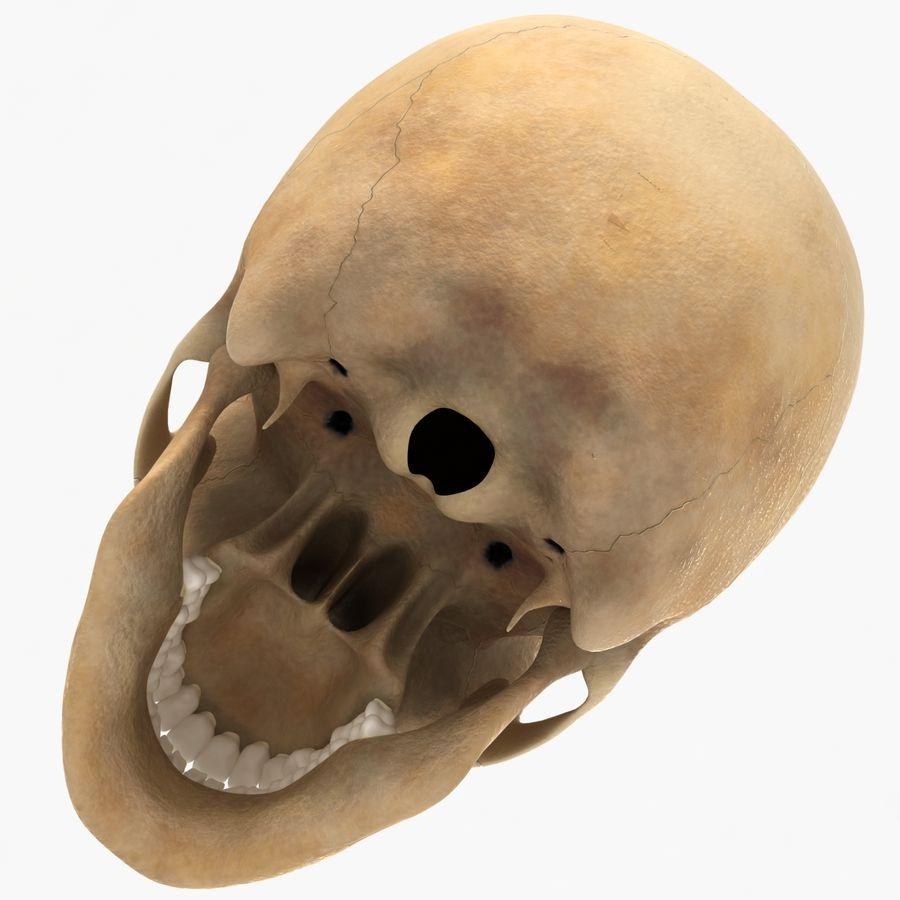 Human Skeleton royalty-free 3d model - Preview no. 22