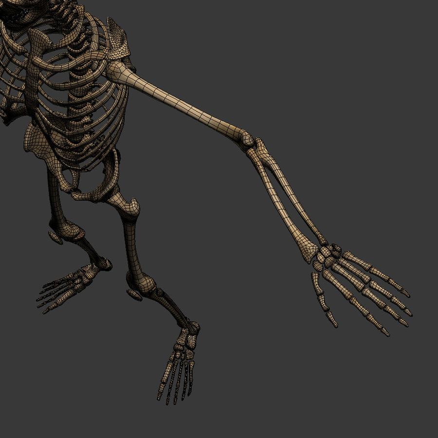 Human Skeleton royalty-free 3d model - Preview no. 30