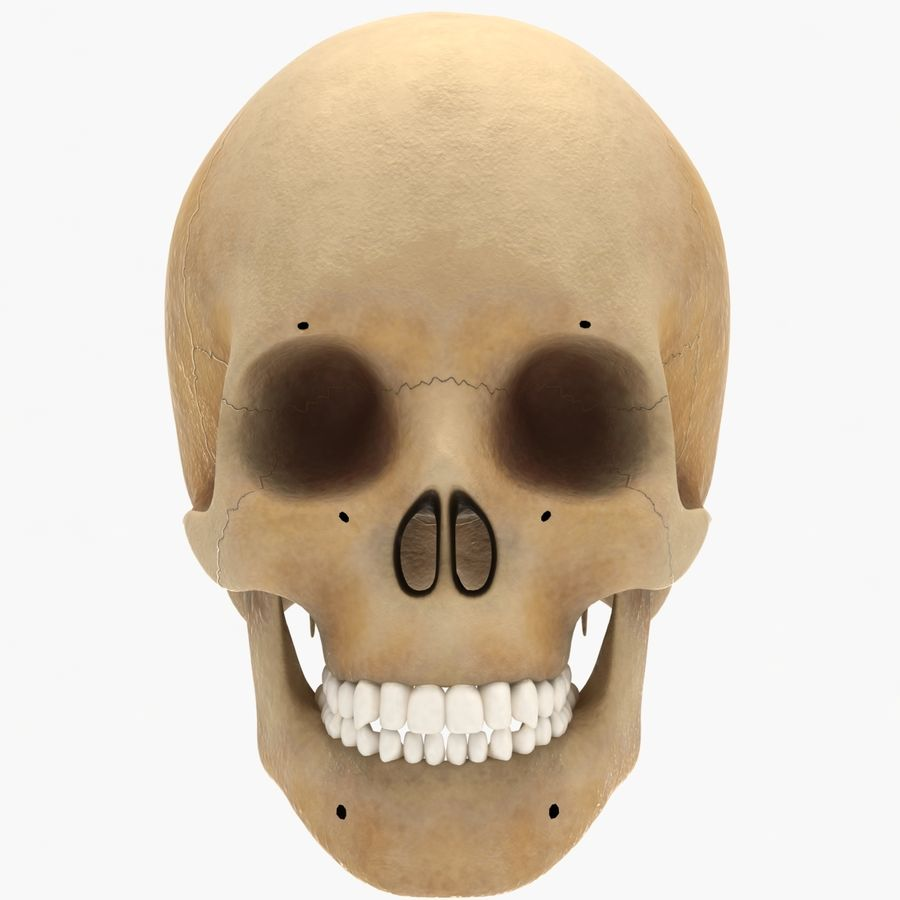 Human Skeleton royalty-free 3d model - Preview no. 21