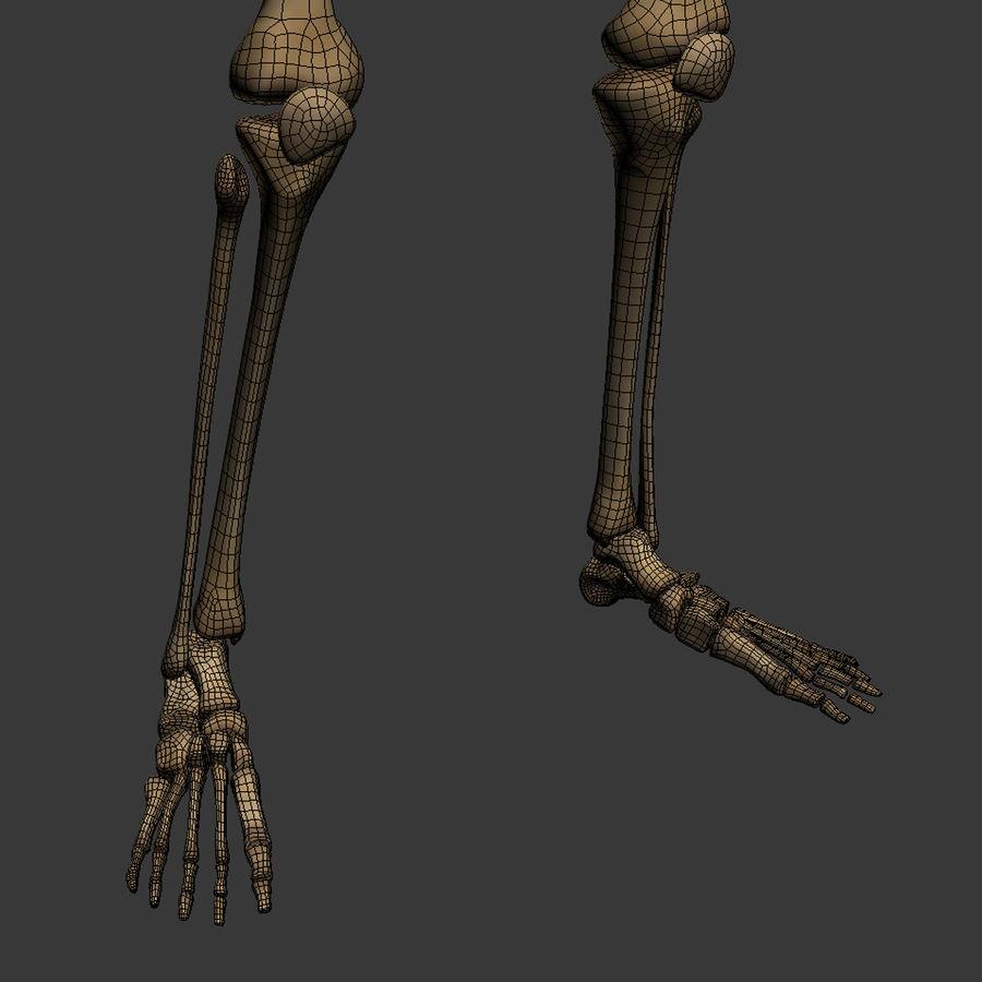 Human Skeleton royalty-free 3d model - Preview no. 29