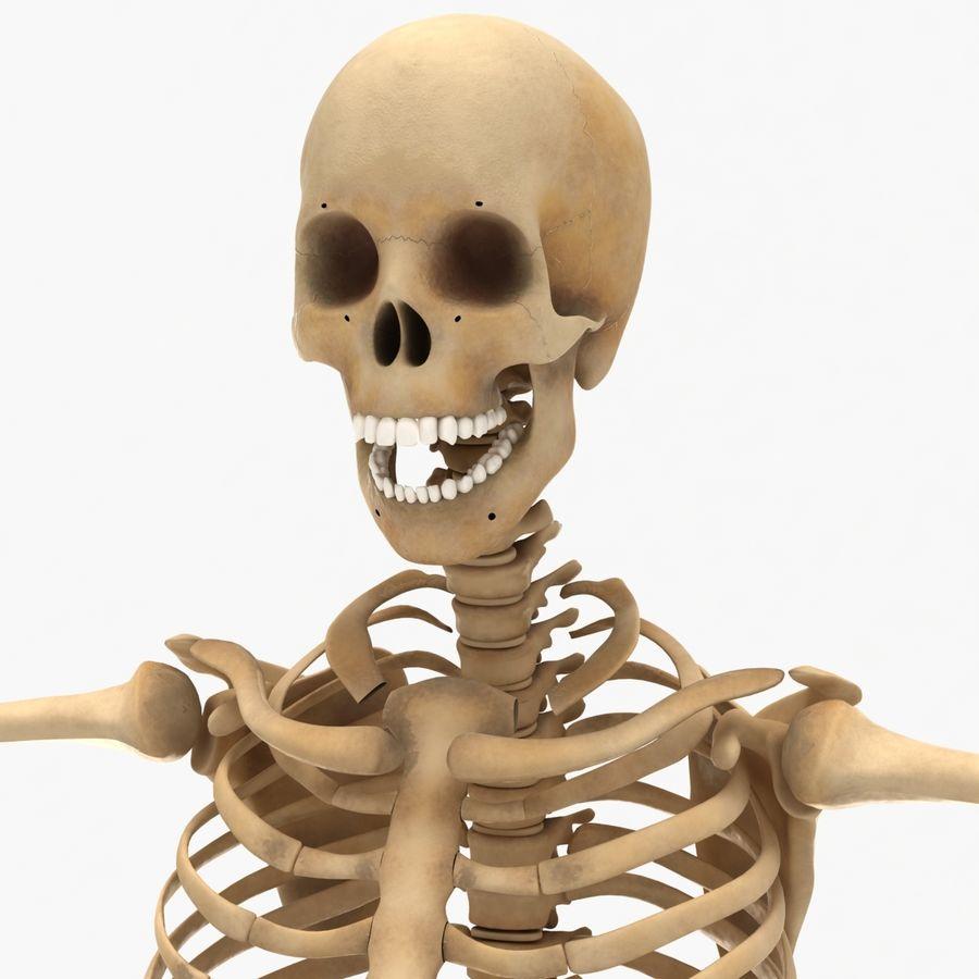 Human Skeleton royalty-free 3d model - Preview no. 17