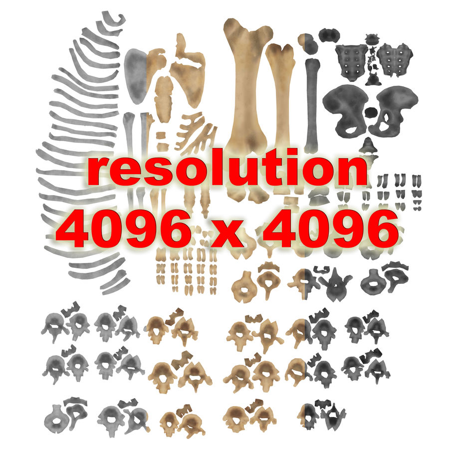 Human Skeleton royalty-free 3d model - Preview no. 25