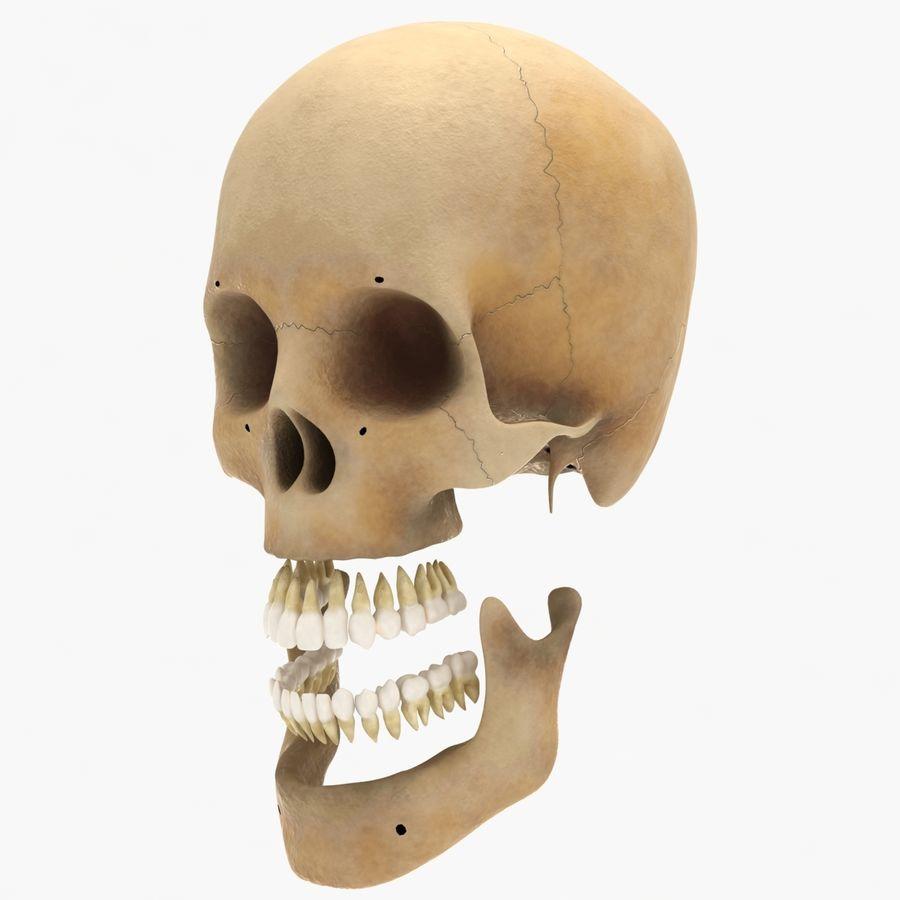Human Skeleton royalty-free 3d model - Preview no. 23