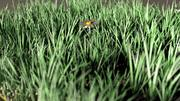 blomma fält äng gräsmark 3d model