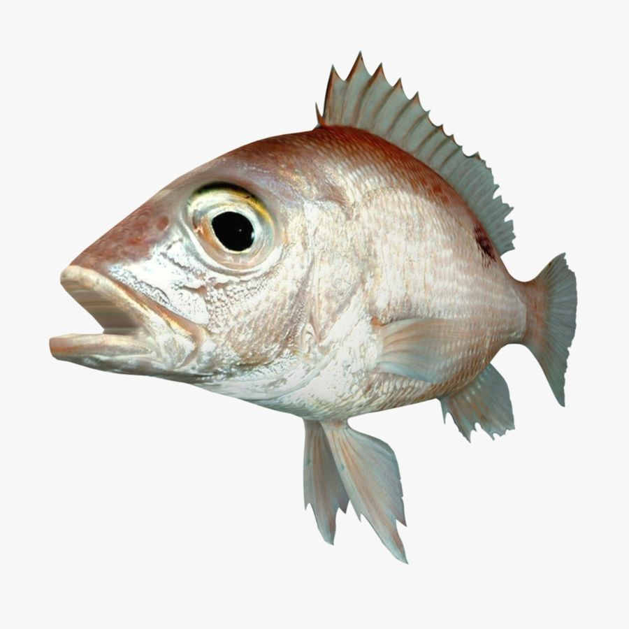 Roter Schnappfisch royalty-free 3d model - Preview no. 2