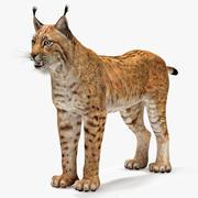 Lynx Eurasian 3d model