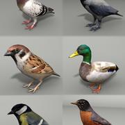 Collezione di uccelli 3d model