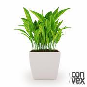 Potted Plants_04 3d model