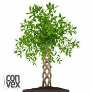 Potted Plants_13 3d model