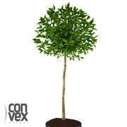Rośliny Doniczkowe_17 3d model