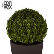 화분에 심은 식물 _18 3d model