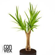 Potted Plants_19 3d model