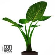 Rośliny Doniczkowe_20 3d model