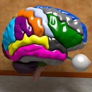 Ultimate Human Brain 3d model