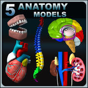 Human Anatomy Collection 3d model