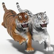 Tigre (animado, pele, duas cores) 3d model