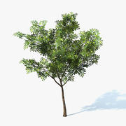 Ficus Tree Low Poly 3d model