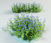 speedwell, oiseau, gypsyweed 3d model