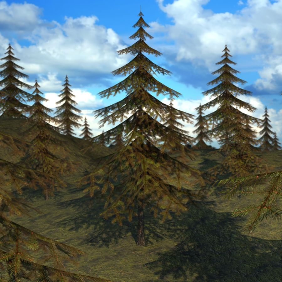 Pine Tree royalty-free 3d model - Preview no. 11