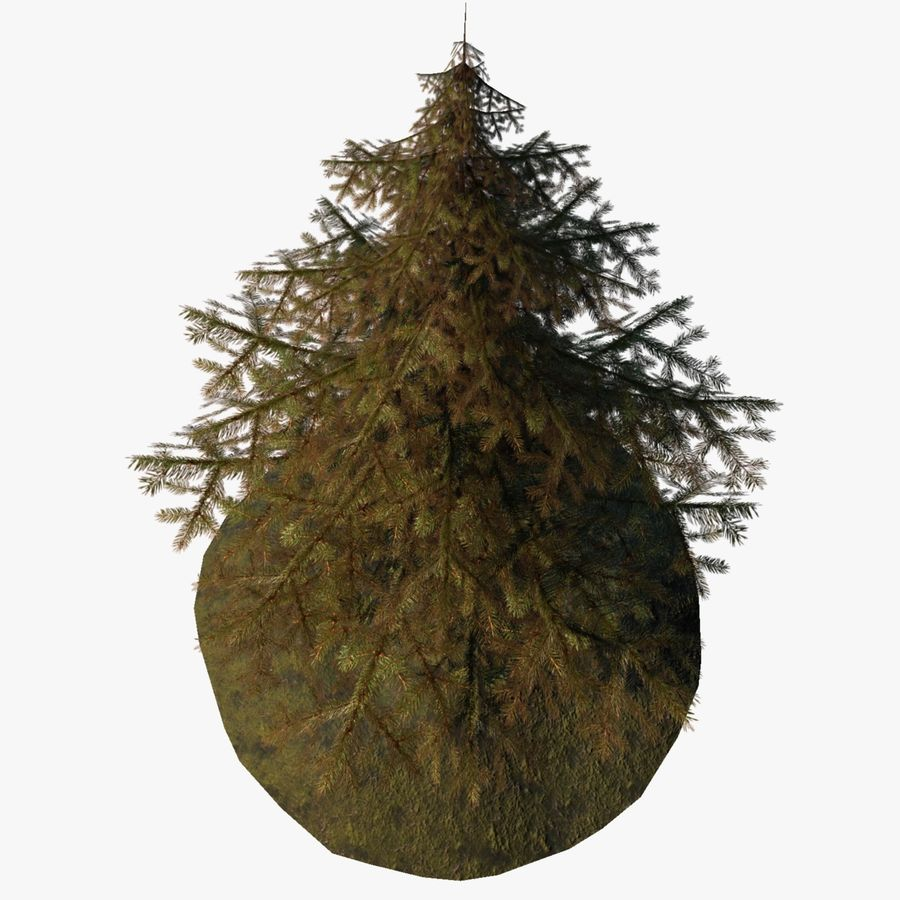 Pine Tree royalty-free 3d model - Preview no. 8