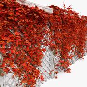 Red Autumn Fall kleur kleur Kleurrijke klimop op witte tuin Houten hek 3d model