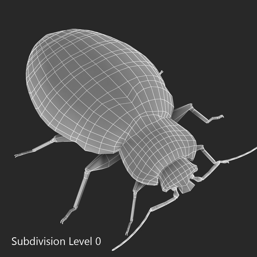 Bed Bug royalty-free 3d model - Preview no. 2