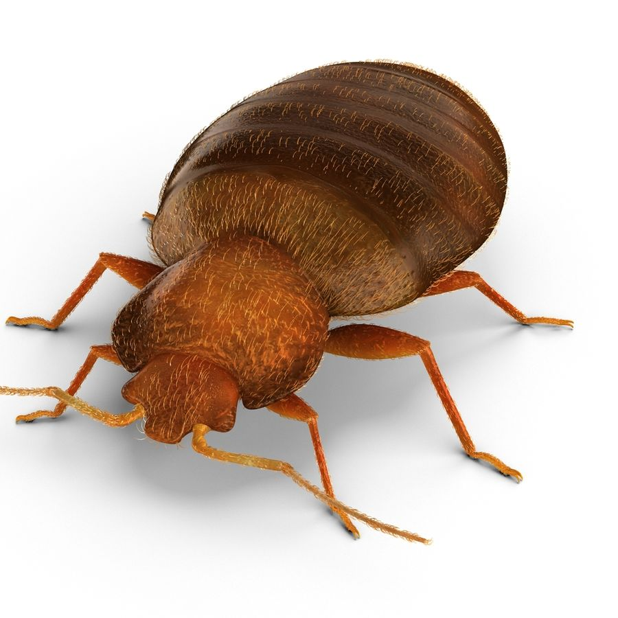 Bed Bug royalty-free 3d model - Preview no. 8