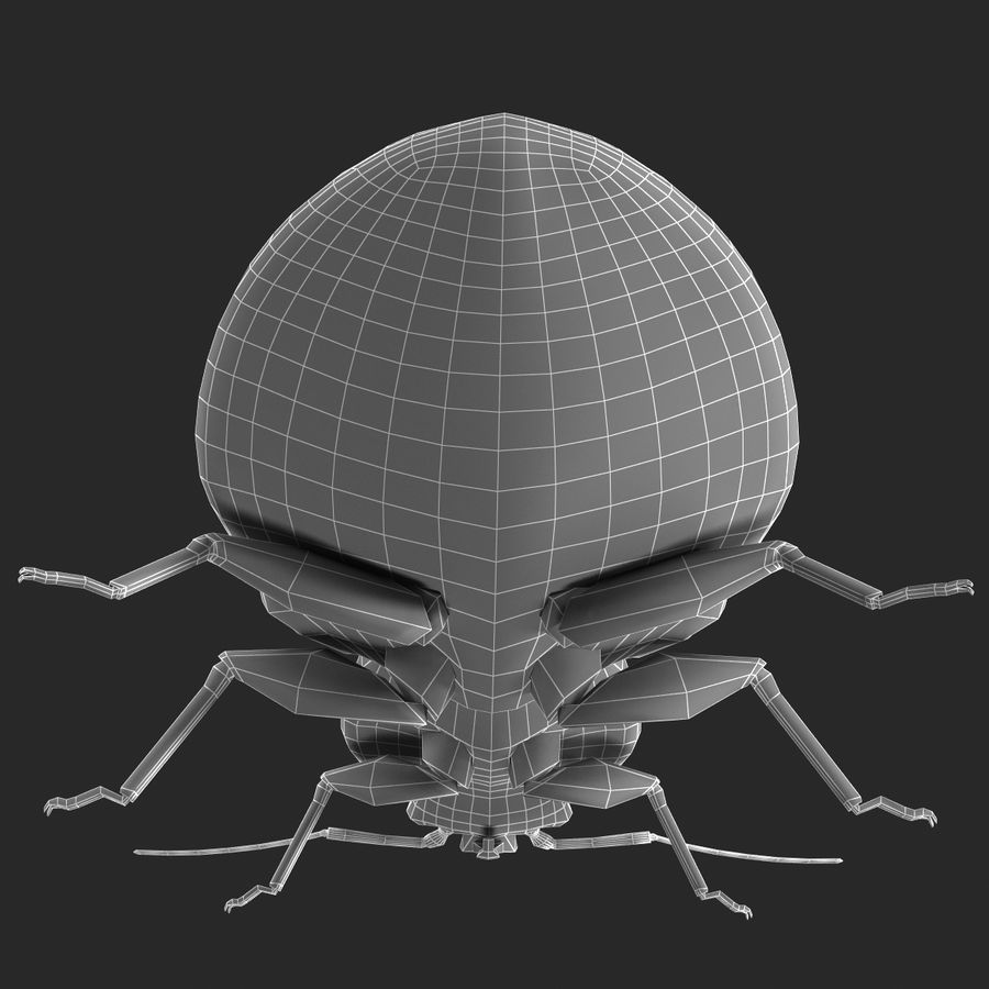 Bed Bug royalty-free 3d model - Preview no. 20