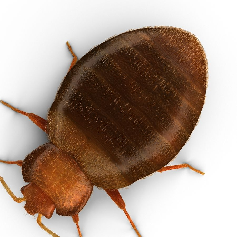 Bed Bug royalty-free 3d model - Preview no. 12