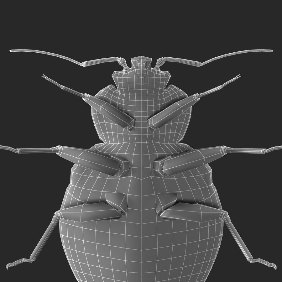 Bed Bug royalty-free 3d model - Preview no. 23