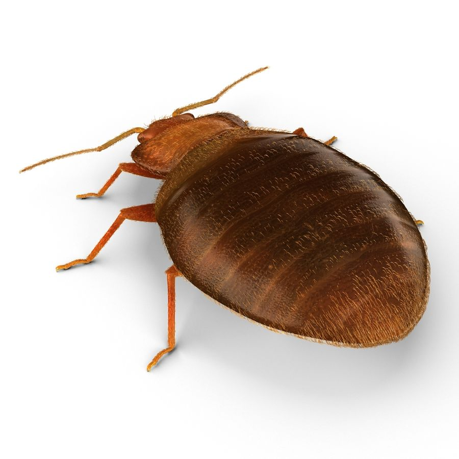 Bed Bug royalty-free 3d model - Preview no. 7