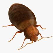 Bed Bug 3d model