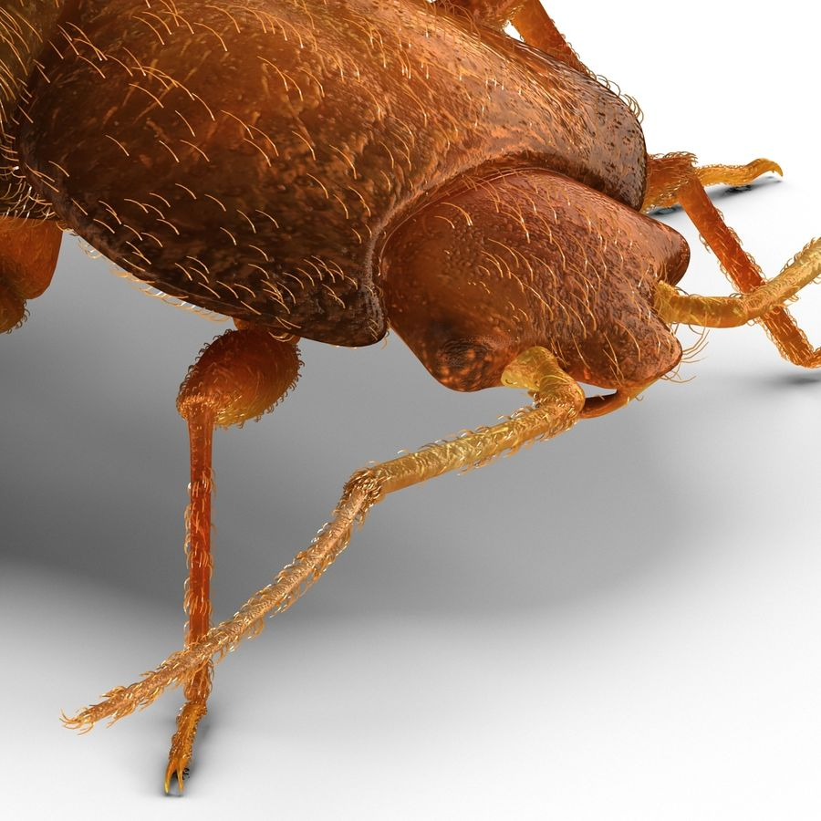 Bed Bug royalty-free 3d model - Preview no. 14