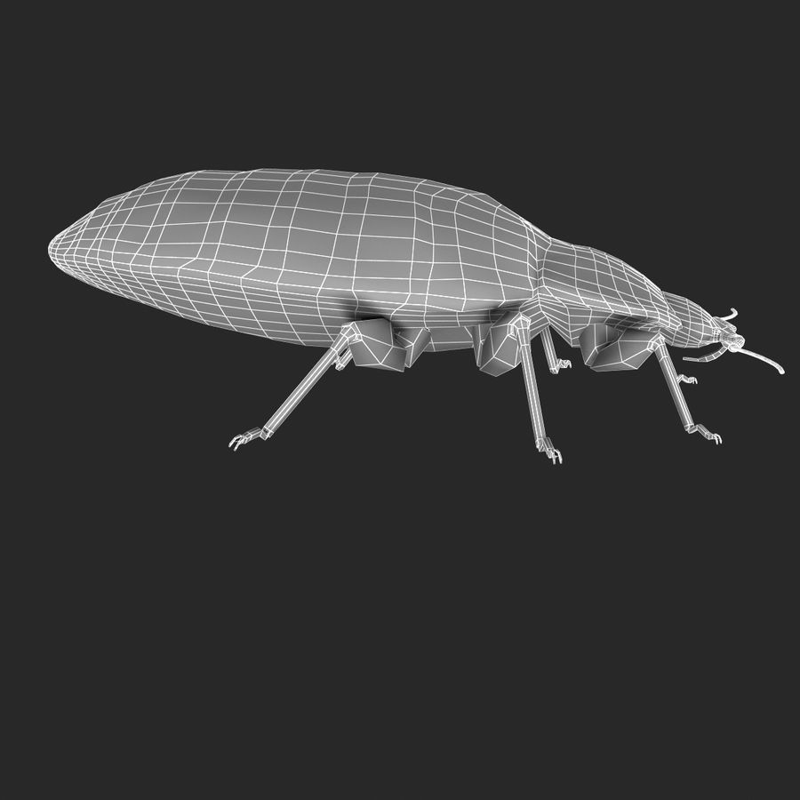 Bed Bug royalty-free 3d model - Preview no. 19