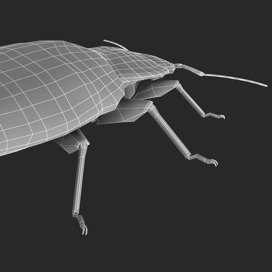 Bed Bug royalty-free 3d model - Preview no. 25