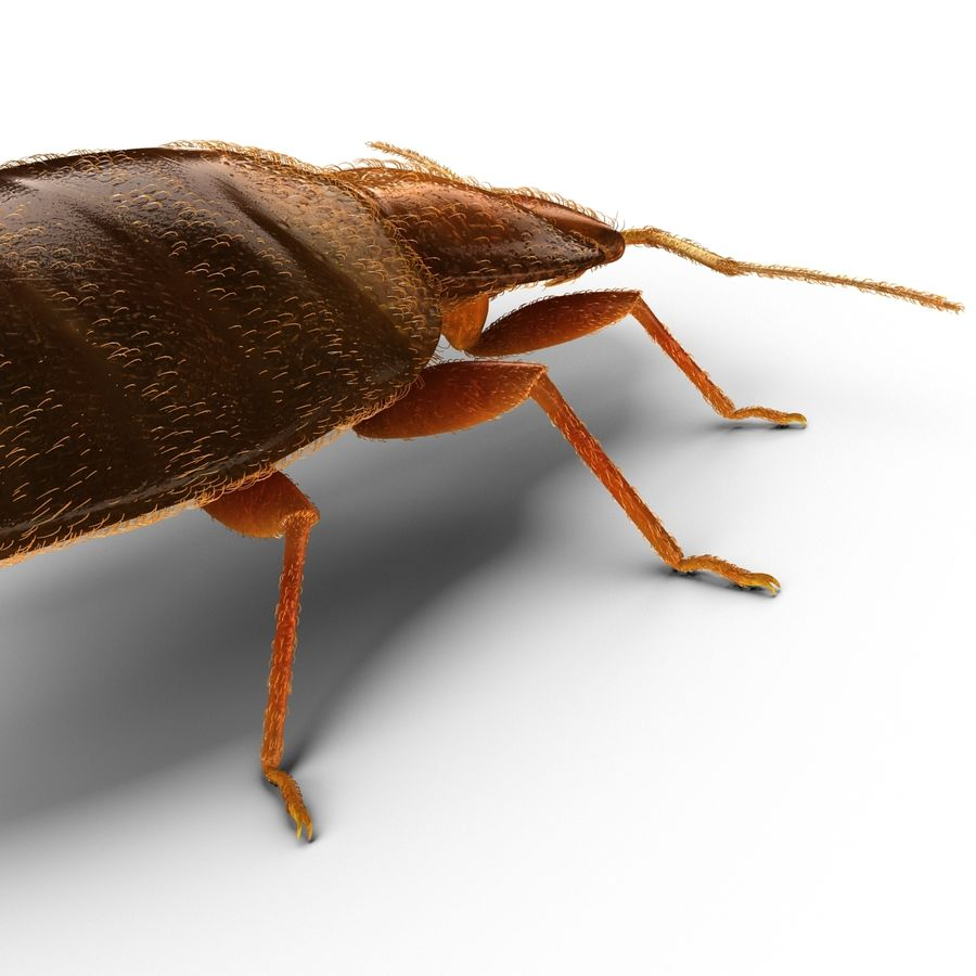 Bed Bug royalty-free 3d model - Preview no. 11