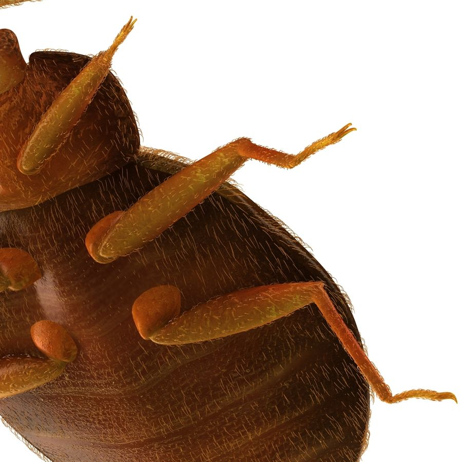 Bed Bug royalty-free 3d model - Preview no. 16