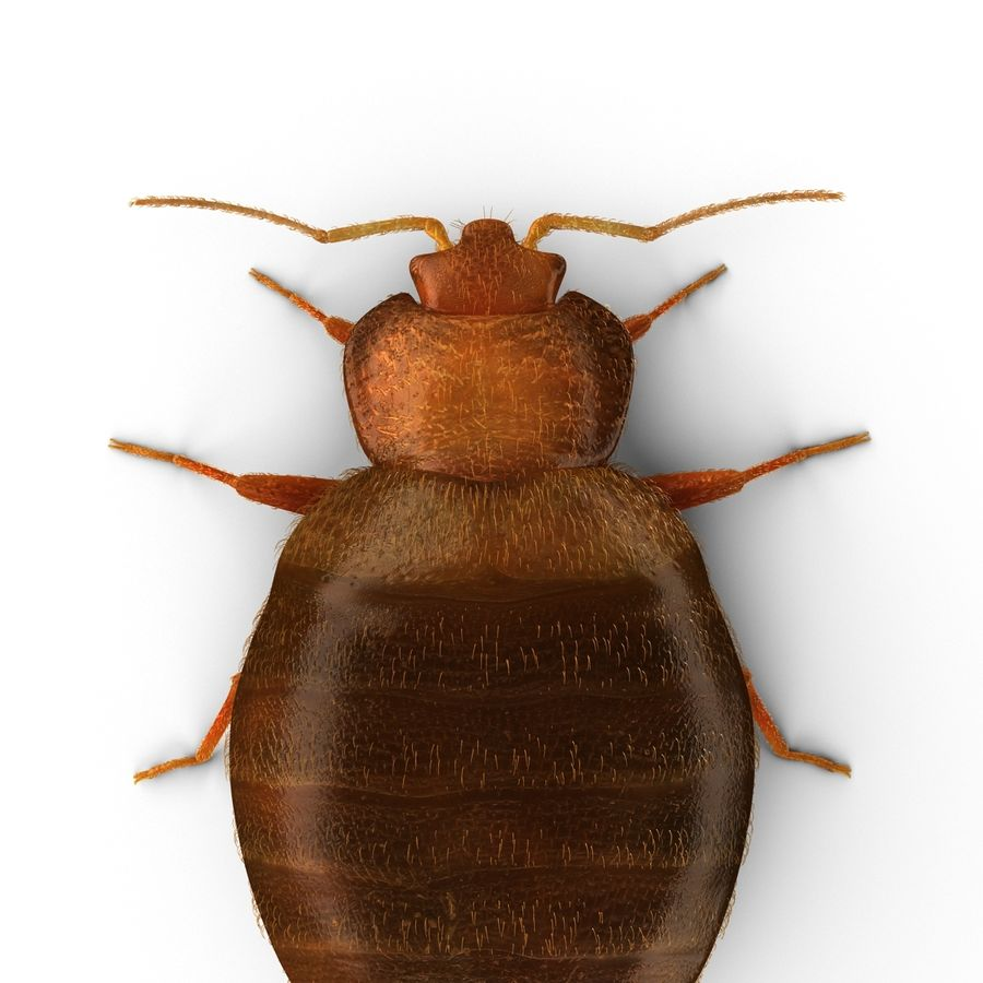 Bed Bug royalty-free 3d model - Preview no. 10