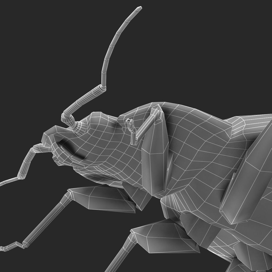 Bed Bug royalty-free 3d model - Preview no. 29