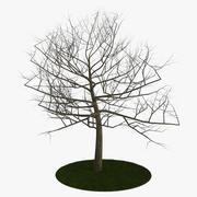 Baum 6 Äste 3d model