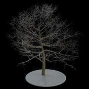 Träd 6 grenar snö 3d model