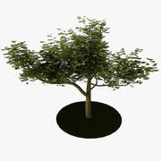 Träd 3 3d model