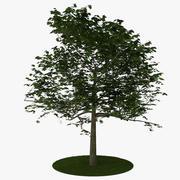 Träd 6 3d model