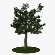 Träd 8 3d model