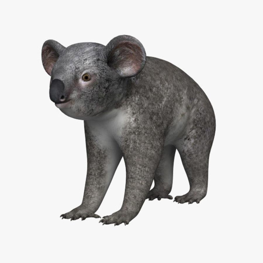 Koala royalty-free 3d model - Preview no. 1